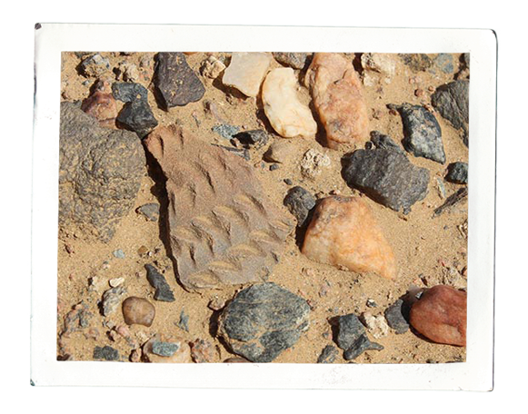 Neolithic potsherd from a site on Mograt (photo: Annett Dittrich)